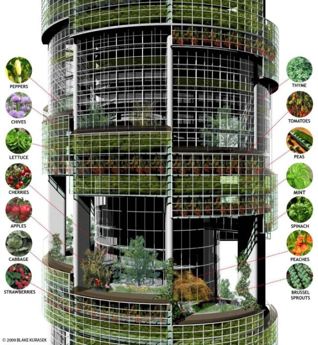 Vertical farm vegetables