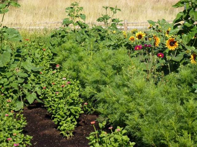 Pollinator Garden in the WSU Arboretum
