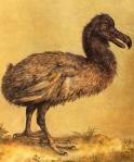 Hoefnagel_dodo