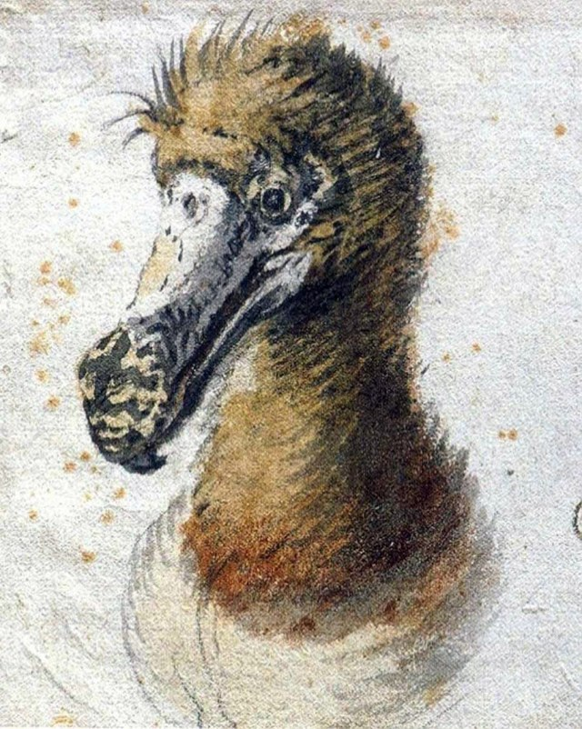 Saftleven_dodo reduced